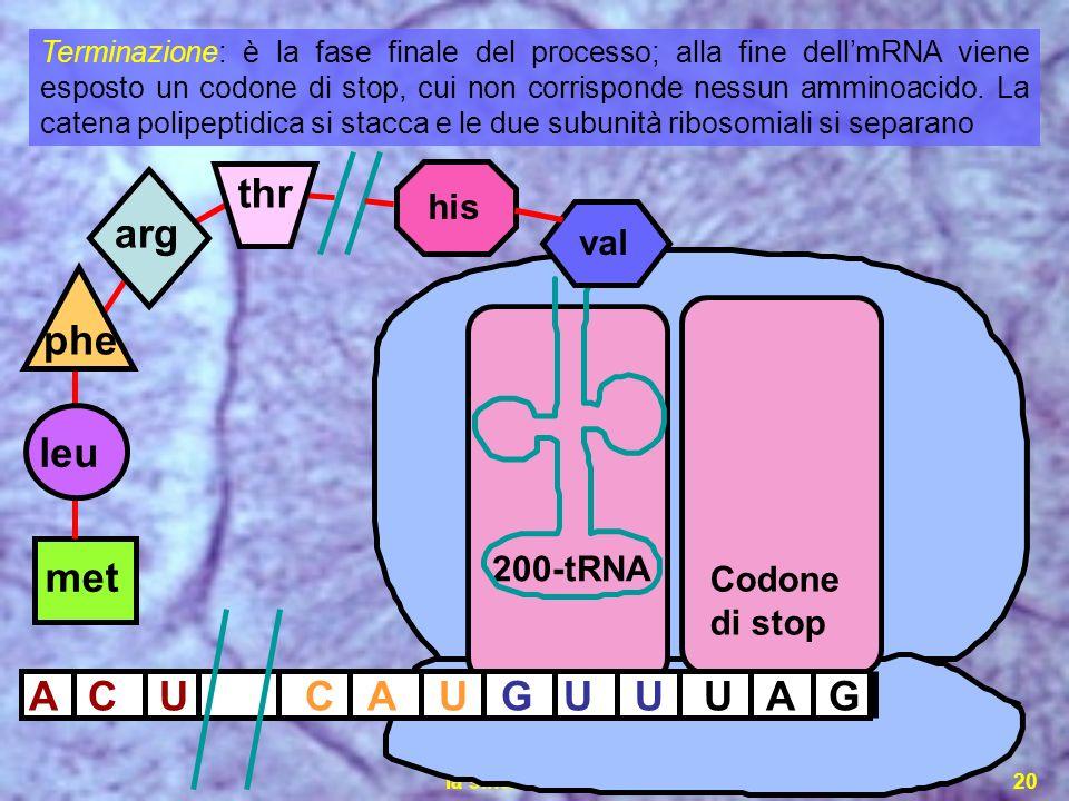 la sintesi proteica20 ACAUGU met U 200-tRNA UAGCU val his Codone di stop leu phe arg thr Terminazione: è la fase finale del processo; alla fine dellmR