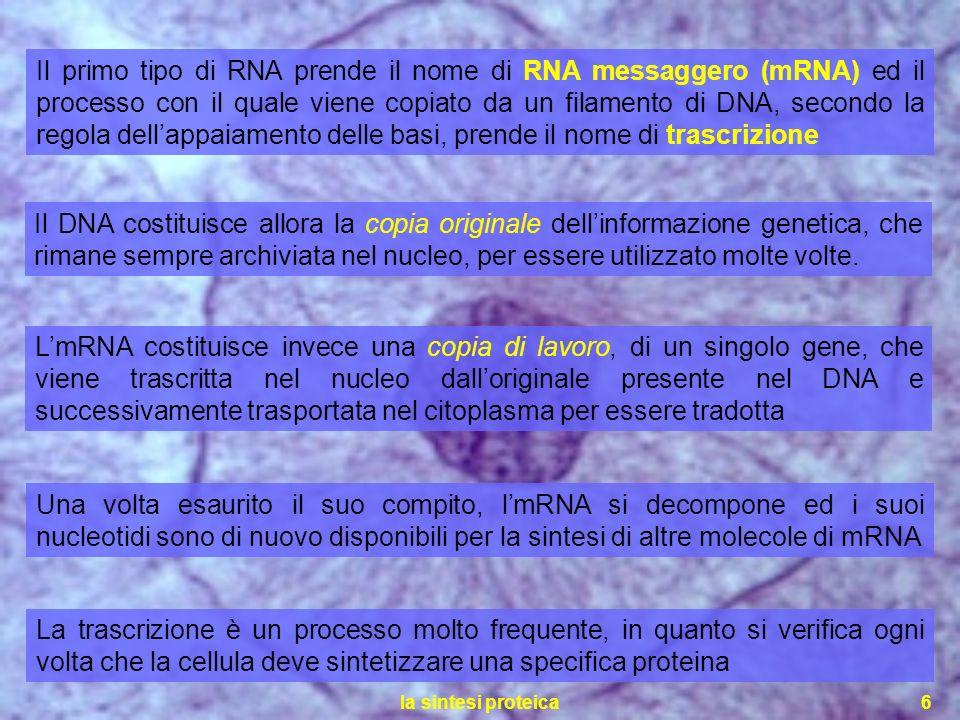 la sintesi proteica6 Il primo tipo di RNA prende il nome di RNA messaggero (mRNA) ed il processo con il quale viene copiato da un filamento di DNA, se