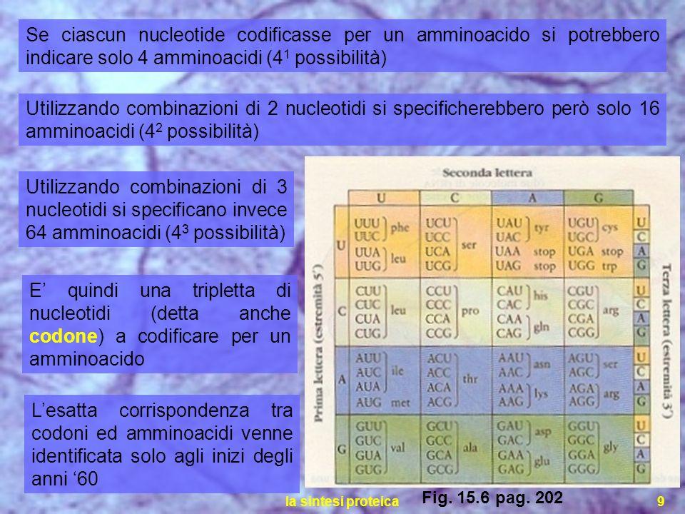 la sintesi proteica10 Il codice genetico è ridondante (più codoni codificano per lo stesso amminoacido), ma non è ambiguo (un codone non può codificare per più di un amminoacido).