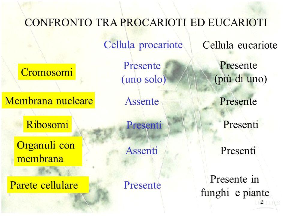 2 CONFRONTO TRA PROCARIOTI ED EUCARIOTI Cellula procariote Cellula eucariote Cromosomi Presente (uno solo) Presente (più di uno) Membrana nucleare Assente Presente Ribosomi Presenti Organuli con membrana Assenti Presenti Parete cellulare Presente Presente in funghi e piante