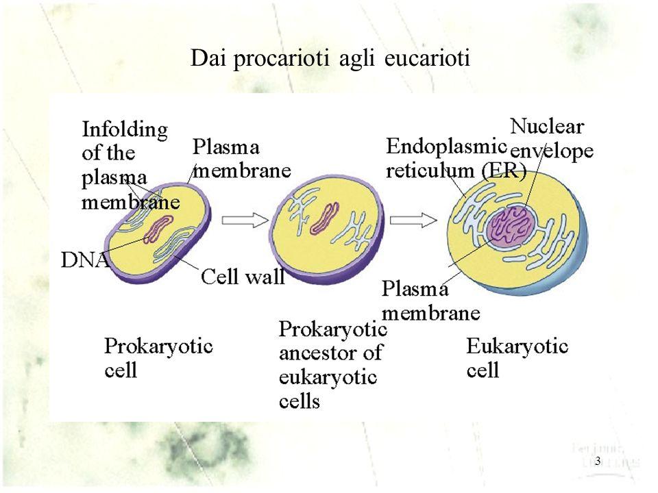 3 Dai procarioti agli eucarioti