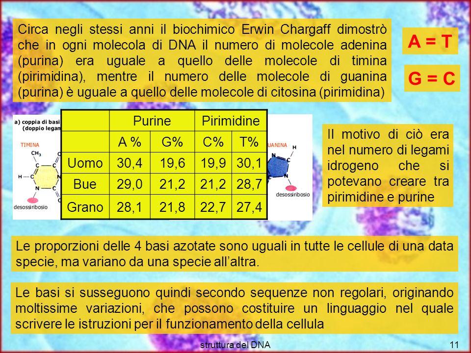 struttura del DNA11 Circa negli stessi anni il biochimico Erwin Chargaff dimostrò che in ogni molecola di DNA il numero di molecole adenina (purina) e