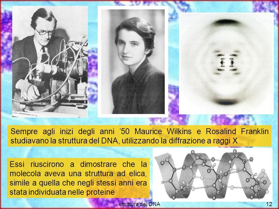struttura del DNA12 Sempre agli inizi degli anni 50 Maurice Wilkins e Rosalind Franklin studiavano la struttura del DNA, utilizzando la diffrazione a