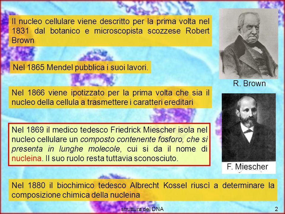 struttura del DNA2 Nel 1865 Mendel pubblica i suoi lavori. Nel 1869 il medico tedesco Friedrick Miescher isola nel nucleo cellulare un composto conten