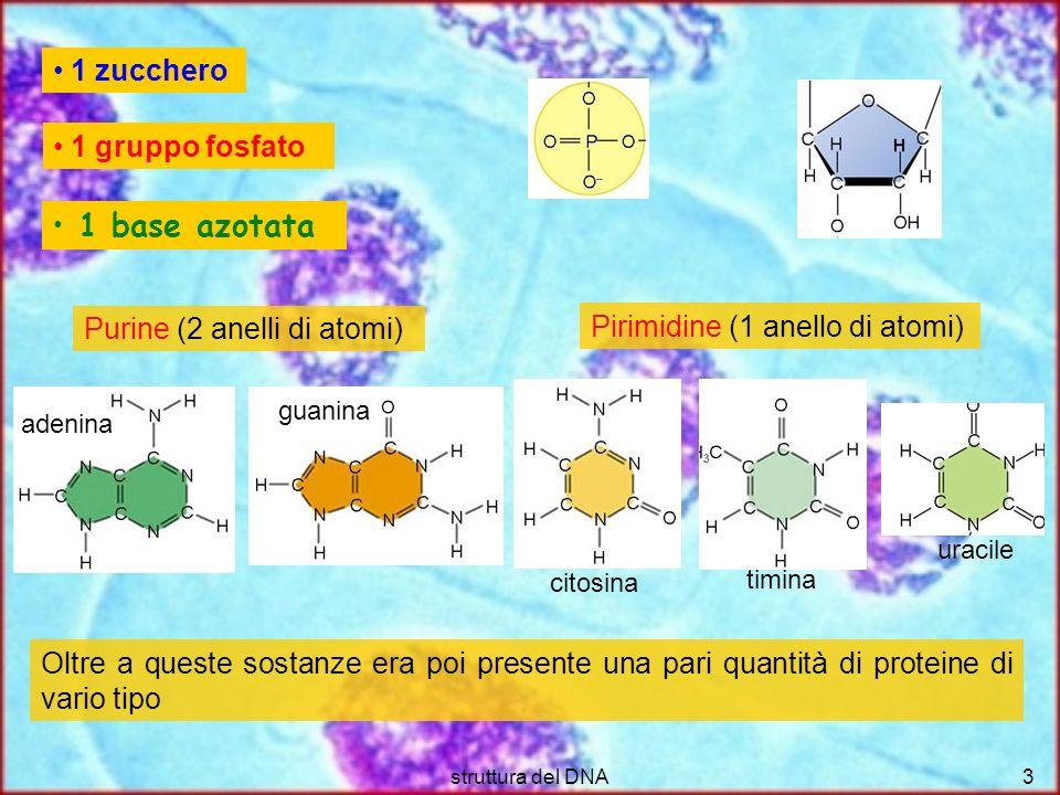 struttura del DNA3 1 zucchero 1 gruppo fosfato 1 base azotata Purine (2 anelli di atomi) Pirimidine (1 anello di atomi) Oltre a queste sostanze era po