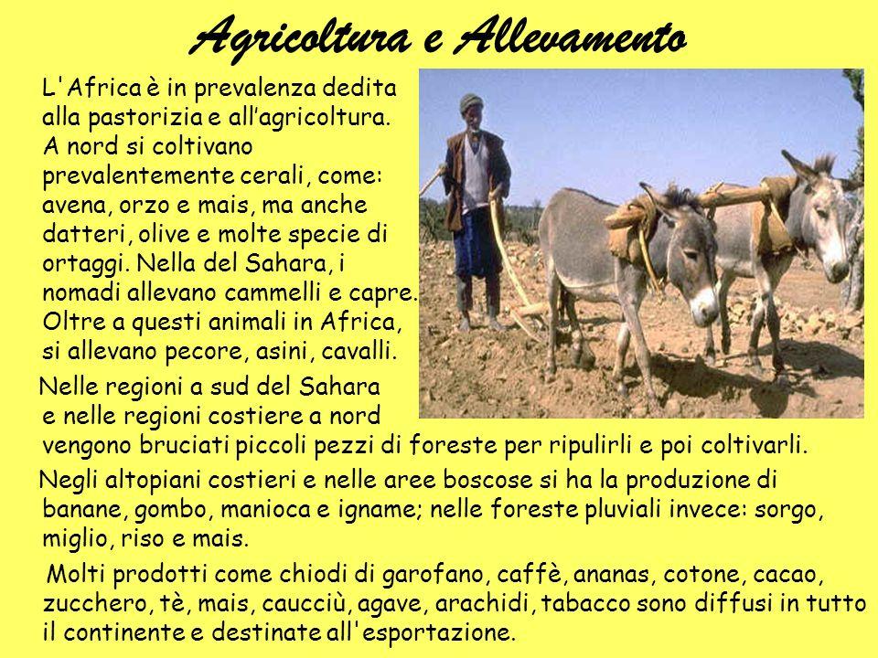 Agricoltura e Allevamento L'Africa è in prevalenza dedita alla pastorizia e allagricoltura. A nord si coltivano prevalentemente cerali, come: avena, o