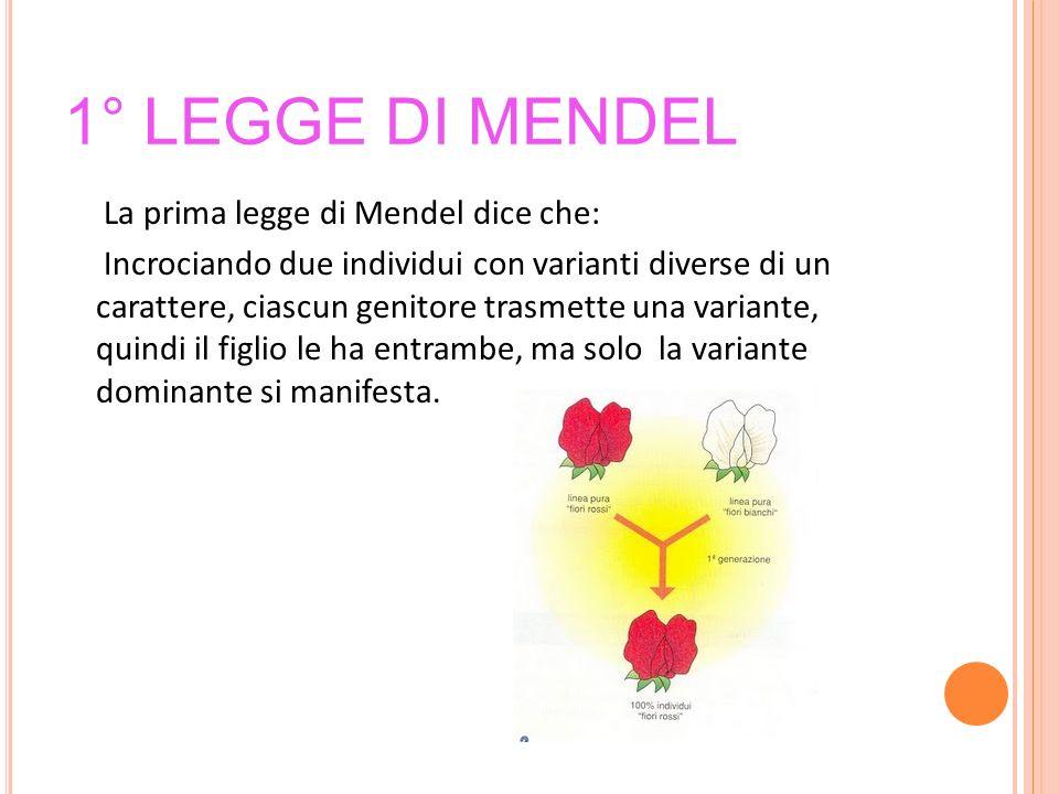 1° LEGGE DI MENDEL La prima legge di Mendel dice che: Incrociando due individui con varianti diverse di un carattere, ciascun genitore trasmette una v