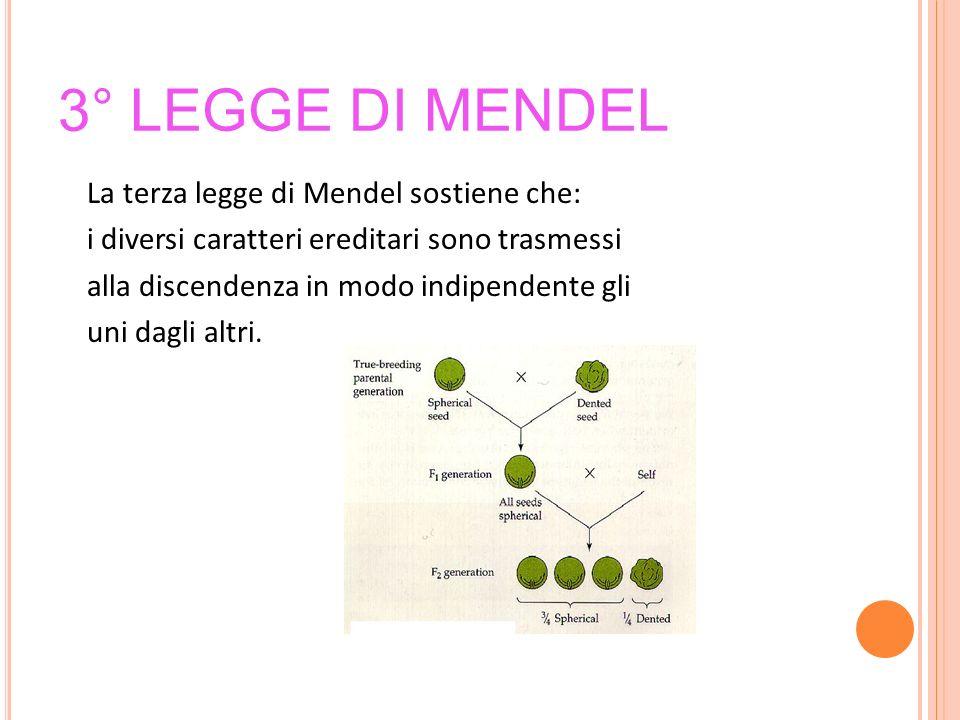 3° LEGGE DI MENDEL La terza legge di Mendel sostiene che: i diversi caratteri ereditari sono trasmessi alla discendenza in modo indipendente gli uni d