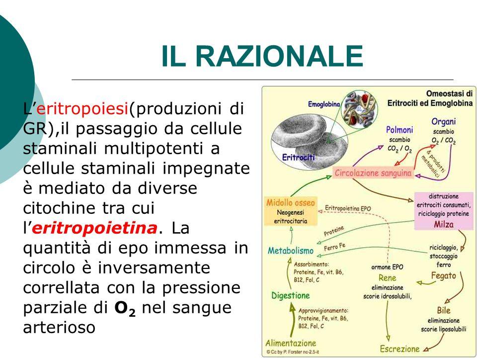 IL RAZIONALE Leritropoiesi(produzioni di GR),il passaggio da cellule staminali multipotenti a cellule staminali impegnate è mediato da diverse citochi