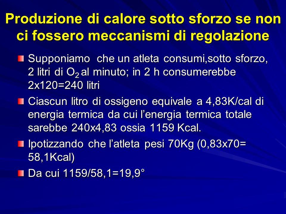 Produzione di calore sotto sforzo se non ci fossero meccanismi di regolazione Supponiamo che un atleta consumi,sotto sforzo, 2 litri di O 2 al minuto; in 2 h consumerebbe 2x120=240 litri Ciascun litro di ossigeno equivale a 4,83K/cal di energia termica da cui lenergia termica totale sarebbe 240x4,83 ossia 1159 Kcal.