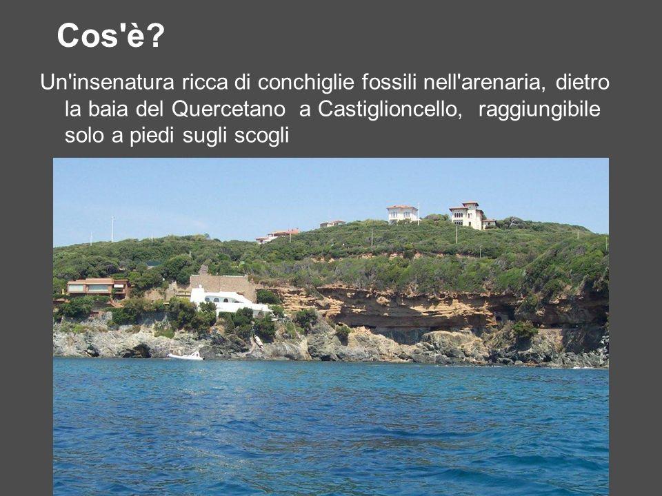 Cos'è? Un'insenatura ricca di conchiglie fossili nell'arenaria, dietro la baia del Quercetano a Castiglioncello, raggiungibile solo a piedi sugli scog