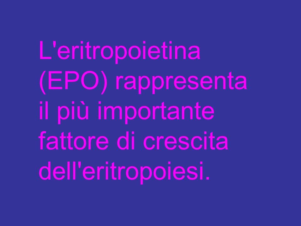 L'eritropoietina (EPO) rappresenta il più importante fattore di crescita dell'eritropoiesi.