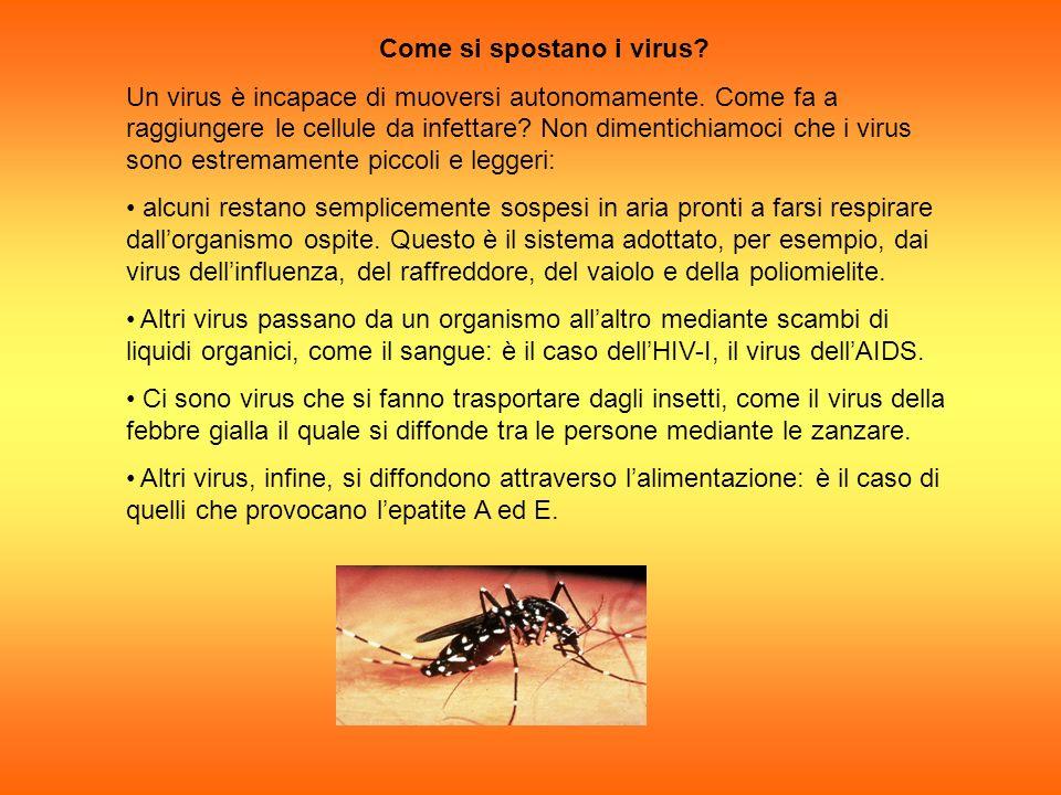 Come si spostano i virus? Un virus è incapace di muoversi autonomamente. Come fa a raggiungere le cellule da infettare? Non dimentichiamoci che i viru