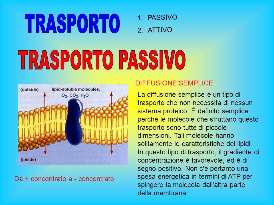 1.PASSIVO 2.ATTIVO DIFFUSIONE SEMPLICE La diffusione semplice è un tipo di trasporto che non necessita di nessun sistema proteico.