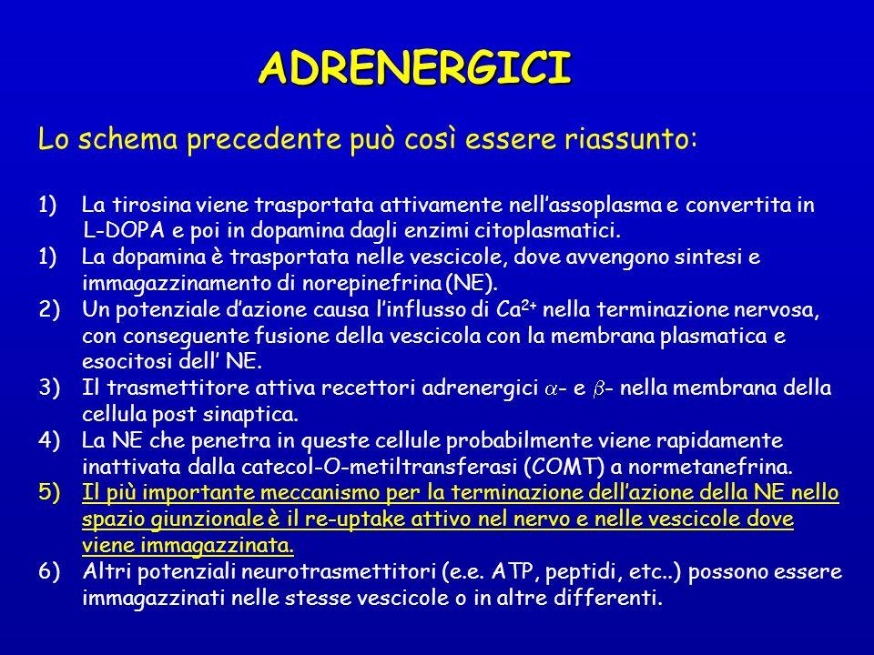 ADRENERGICI Lo schema precedente può così essere riassunto: 1)La tirosina viene trasportata attivamente nellassoplasma e convertita in L-DOPA e poi in