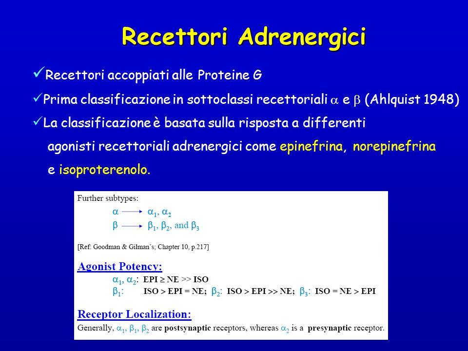Recettori Adrenergici Recettori accoppiati alle Proteine G Prima classificazione in sottoclassi recettoriali e (Ahlquist 1948) La classificazione è ba