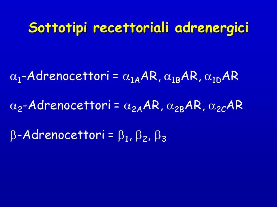 1 -Adrenocettori = 1A AR, 1B AR, 1D AR 2 -Adrenocettori = 2A AR, 2B AR, 2C AR -Adrenocettori = 1, 2, 3 Sottotipi recettoriali adrenergici