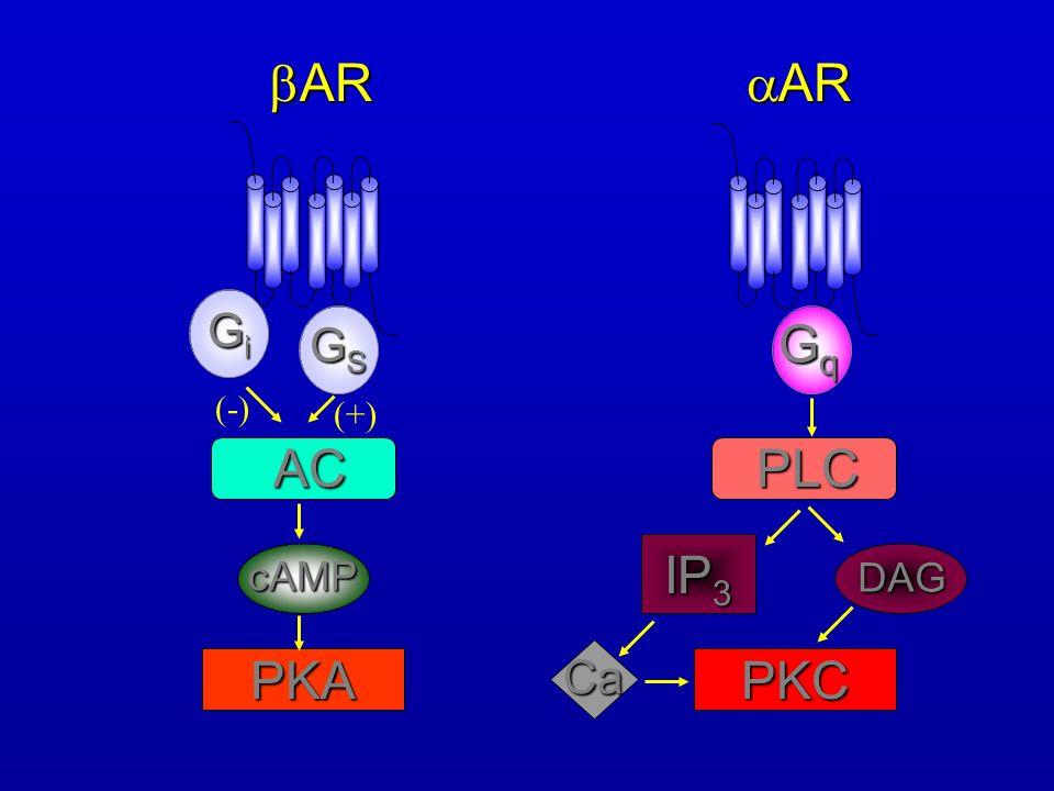 AR AR GiGiGiGi GSGSGSGS AC cAMP PKA (-) (+) GqGqGqGq PLC IP 3 PKC DAG Ca