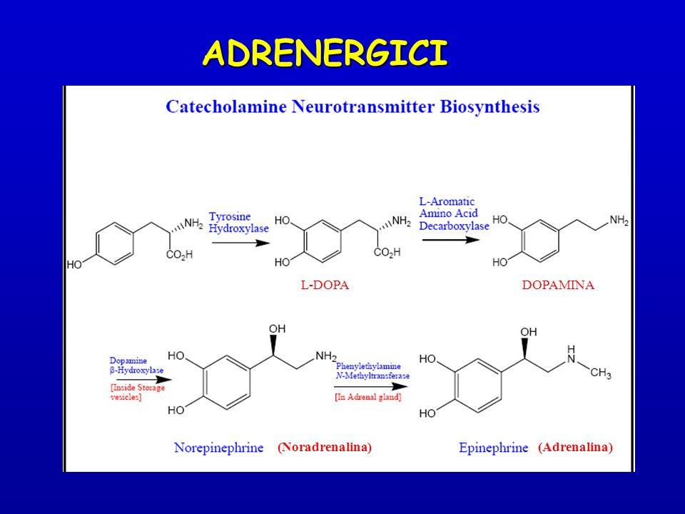 ADRENERGICI L-DOPADOPAMINA (Noradrenalina) (Adrenalina)