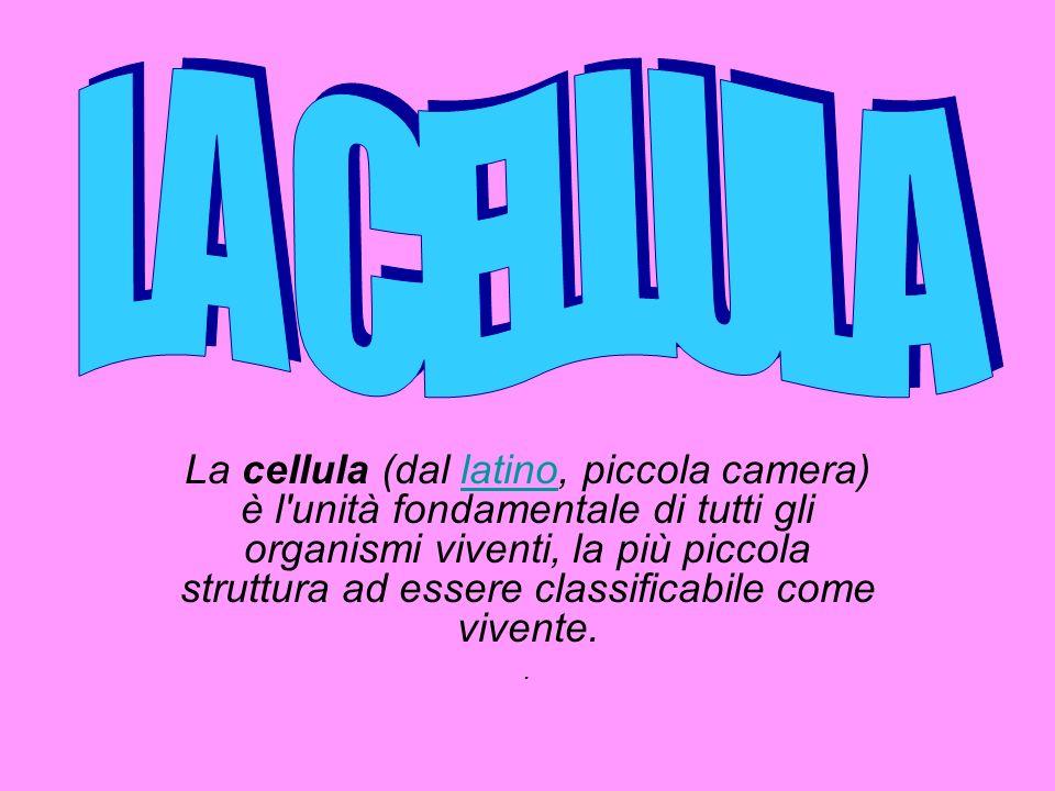 VACUOLI Il vacuolo è una cisterna contenente sostanze utili per la cellula (proteine, zuccheri e Sali minerali)