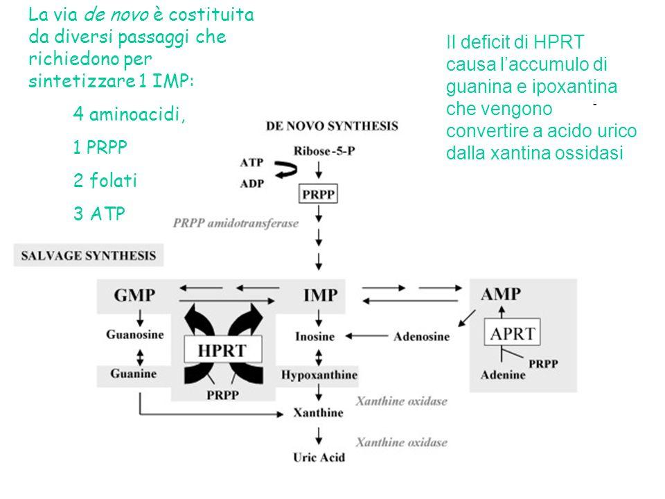 La via de novo è costituita da diversi passaggi che richiedono per sintetizzare 1 IMP: 4 aminoacidi, 1 PRPP 2 folati 3 ATP Il deficit di HPRT causa laccumulo di guanina e ipoxantina che vengono convertire a acido urico dalla xantina ossidasi