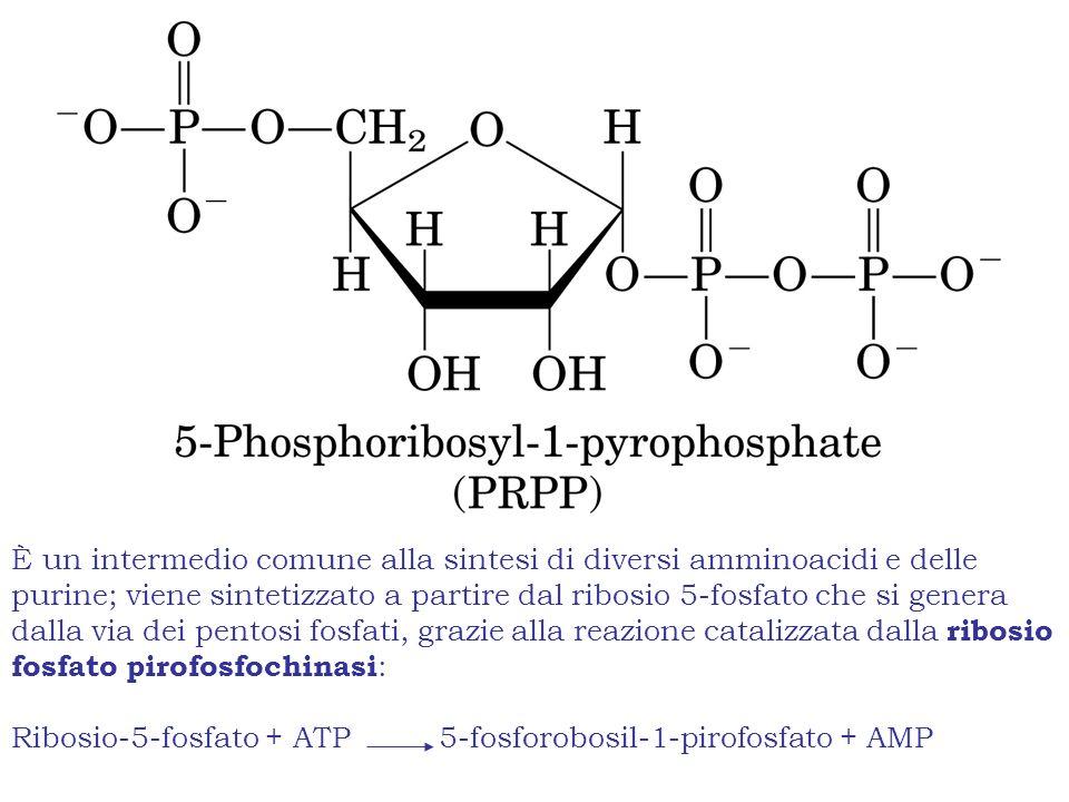 È un intermedio comune alla sintesi di diversi amminoacidi e delle purine; viene sintetizzato a partire dal ribosio 5-fosfato che si genera dalla via dei pentosi fosfati, grazie alla reazione catalizzata dalla ribosio fosfato pirofosfochinasi : Ribosio-5-fosfato + ATP5-fosforobosil-1-pirofosfato + AMP
