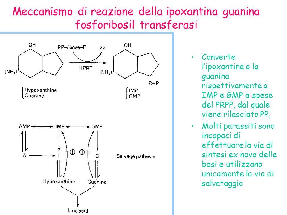 Meccanismo di reazione della ipoxantina guanina fosforibosil transferasi Converte lipoxantina o la guanina rispettivamente a IMP e GMP a spese del PRPP, dal quale viene rilasciato PP i Molti parassiti sono incapaci di effettuare la via di sintesi ex novo delle basi e utilizzano unicamente la via di salvataggio