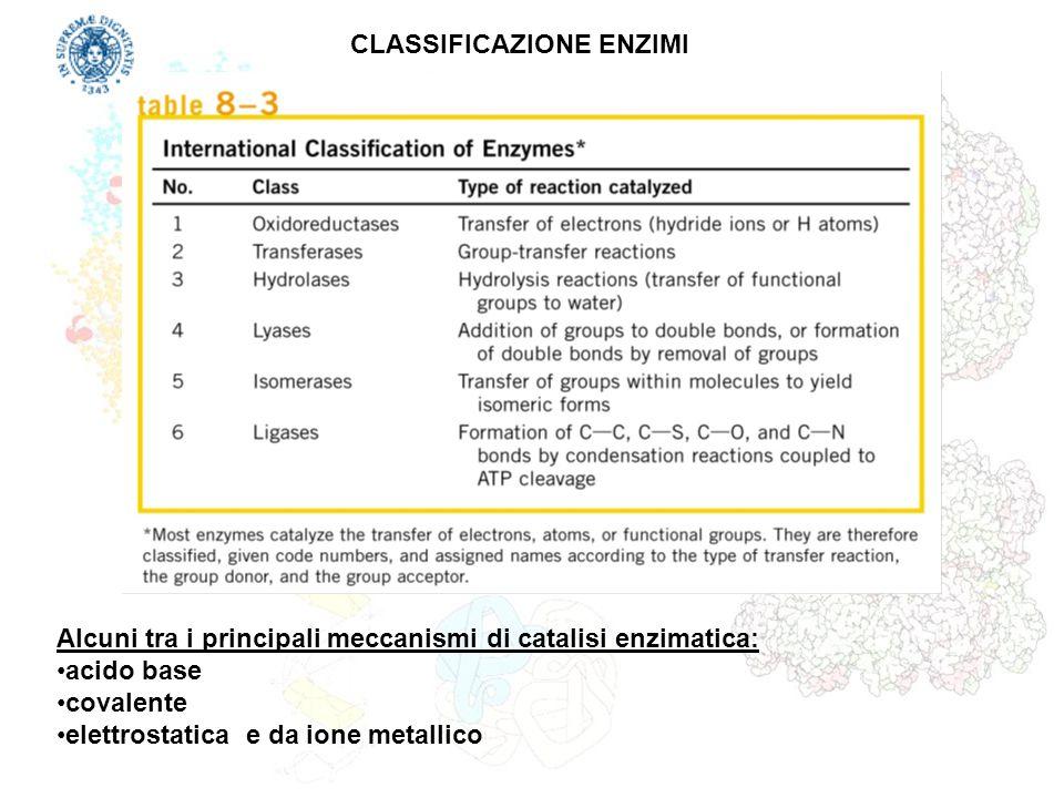 CLASSIFICAZIONE ENZIMI Alcuni tra i principali meccanismi di catalisi enzimatica: acido base covalente elettrostatica e da ione metallico