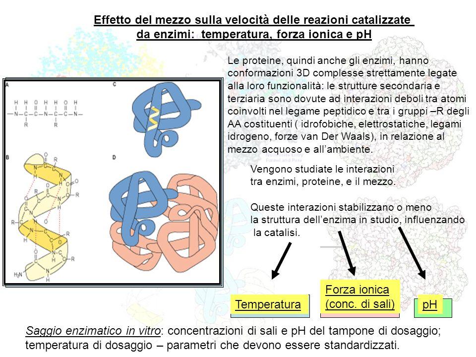 pH Forza ionica (conc. di sali) Effetto del mezzo sulla velocità delle reazioni catalizzate da enzimi: temperatura, forza ionica e pH Vengono studiate