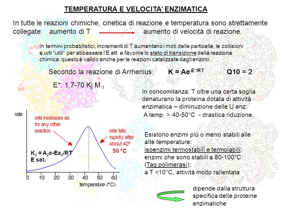 TEMPERATURA E VELOCITA ENZIMATICA In tutte le reazioni chimiche, cinetica di reazione e temperatura sono strettamente collegate: aumento di T aumento