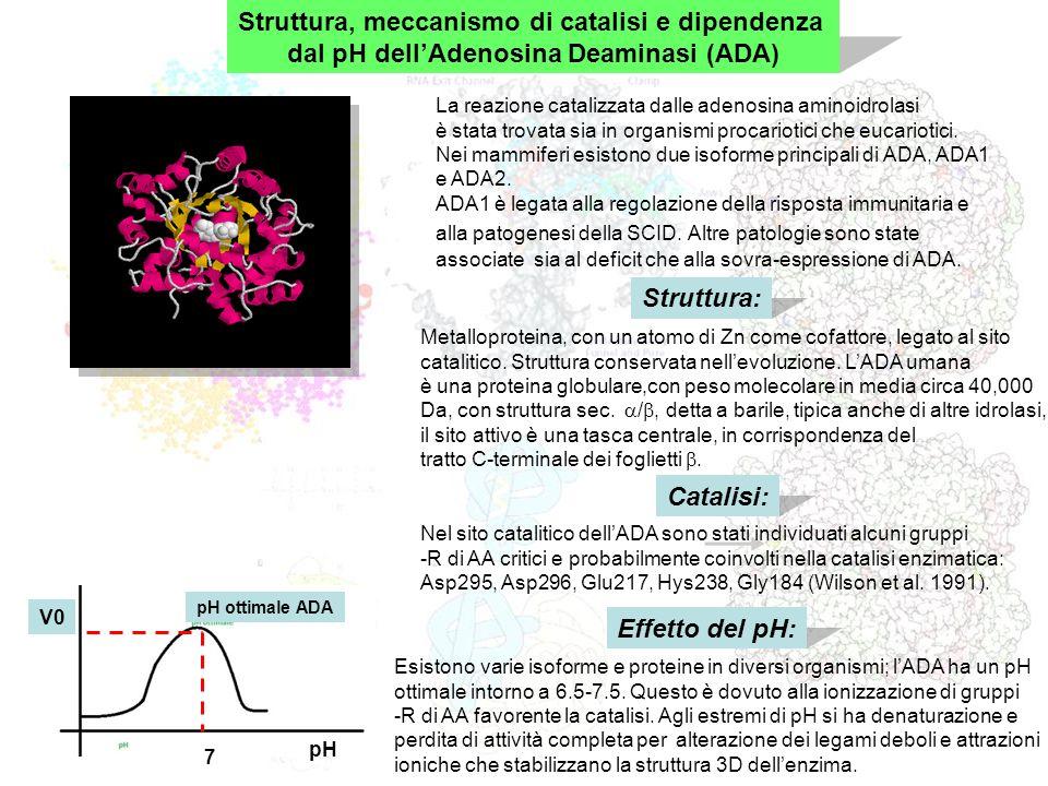 Struttura, meccanismo di catalisi e dipendenza dal pH dellAdenosina Deaminasi (ADA) Struttura: La reazione catalizzata dalle adenosina aminoidrolasi è