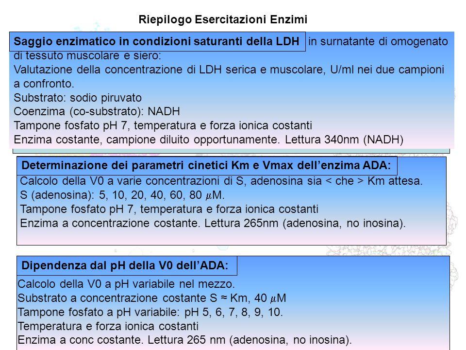 Riepilogo Esercitazioni Enzimi in surnatante di omogenato di tessuto muscolare e siero: Valutazione della concentrazione di LDH serica e muscolare, U/