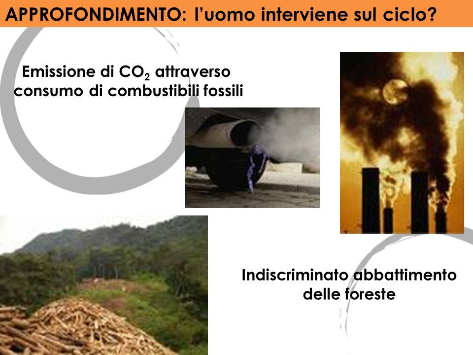 APPROFONDIMENTO: luomo interviene sul ciclo? Emissione di CO 2 attraverso consumo di combustibili fossili Indiscriminato abbattimento delle foreste