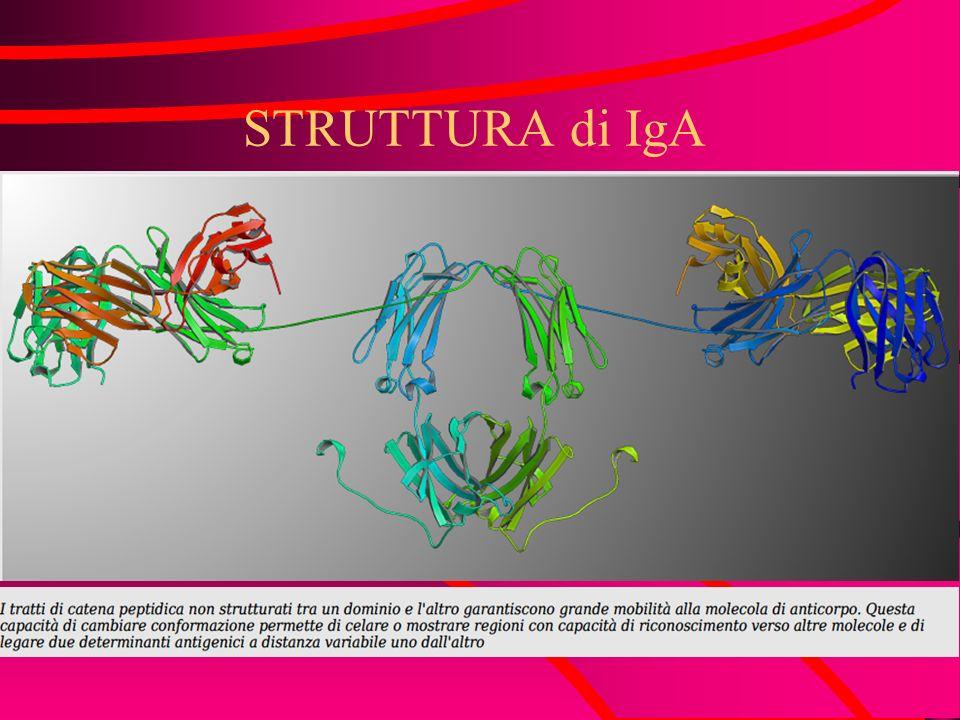 STRUTTURA di IgA