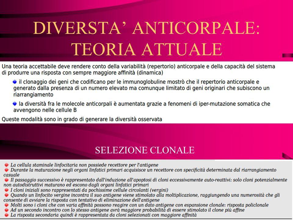 DIVERSTA ANTICORPALE: TEORIA ATTUALE SELEZIONE CLONALE