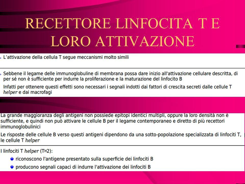 RECETTORE LINFOCITA T E LORO ATTIVAZIONE
