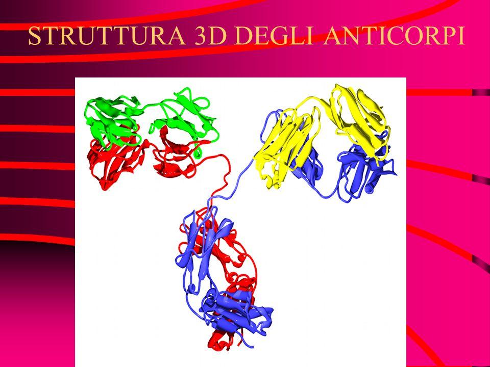 STRUTTURA 2D DEGLI ANTICORPI Due coppie di catene polipeptidiche differenti Catene pesanti e leggere Ciascun anticorpo è formato da due catene pesanti e due leggere e ponti disolfuro a legarle