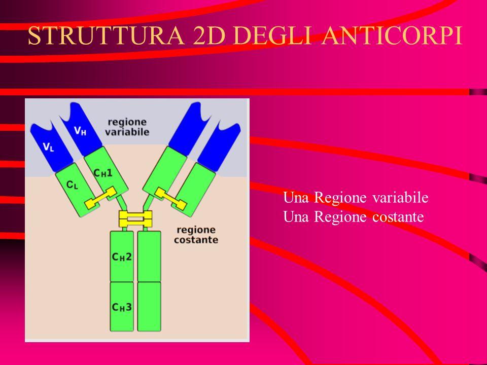 STRUTTURA 2D DEGLI ANTICORPI Una Regione variabile Una Regione costante