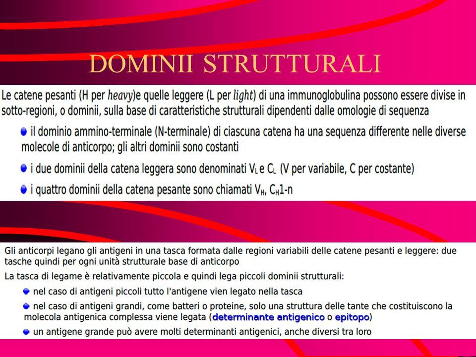 STRUTTURA/FUNZIONE DEGLI ANTICORPI