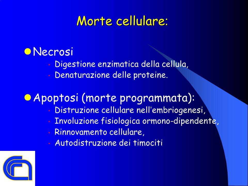 Morte cellulare : Necrosi Digestione enzimatica della cellula, Denaturazione delle proteine. Apoptosi (morte programmata): Distruzione cellulare nell