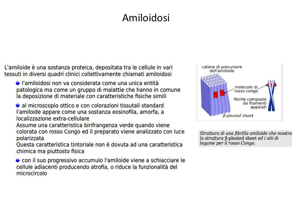 Amiloidosi: Natura chimico-fisica