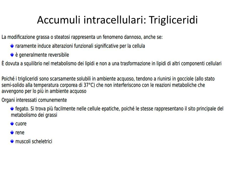 Accumuli intracellulari: Trigliceridi e metabolismo acidi grassi nel fegato