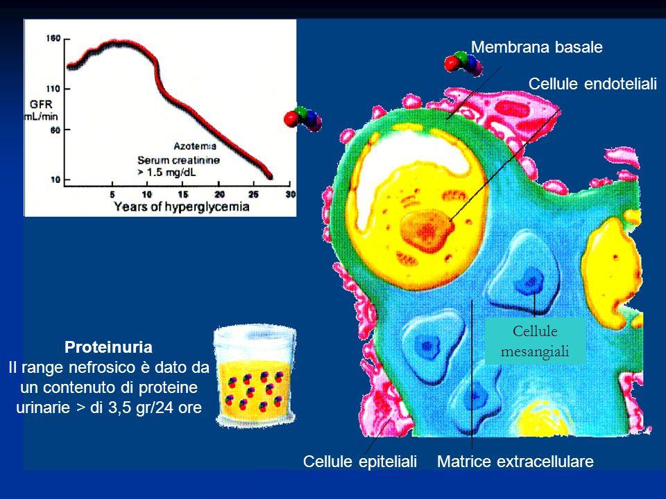 Membrana basale Cellule endoteliali Cellule epiteliali Matrice extracellulare Cellule mesangiali Proteinuria Il range nefrosico è dato da un contenuto di proteine urinarie > di 3,5 gr/24 ore