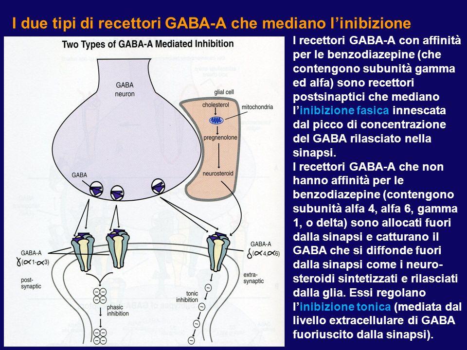 I due tipi di recettori GABA-A che mediano linibizione I recettori GABA-A con affinità per le benzodiazepine (che contengono subunità gamma ed alfa) s