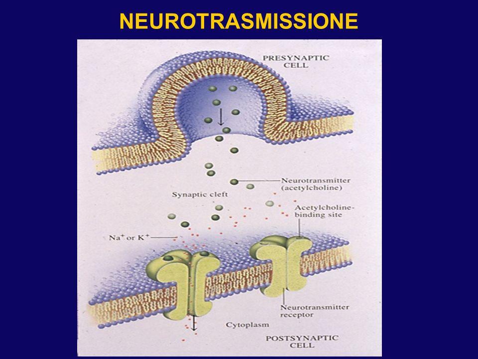 NEUROTRASMISSIONE