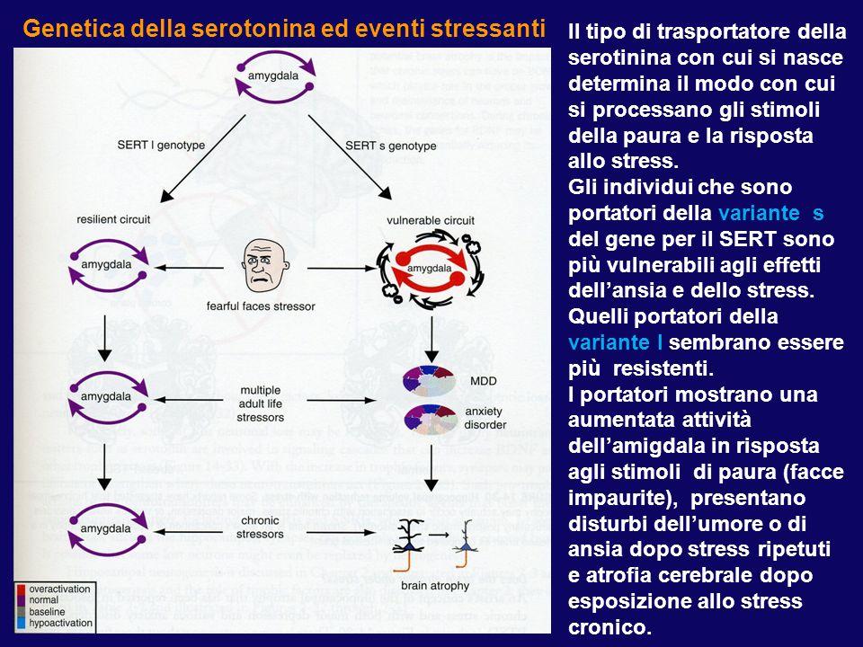 Il tipo di trasportatore della serotinina con cui si nasce determina il modo con cui si processano gli stimoli della paura e la risposta allo stress.
