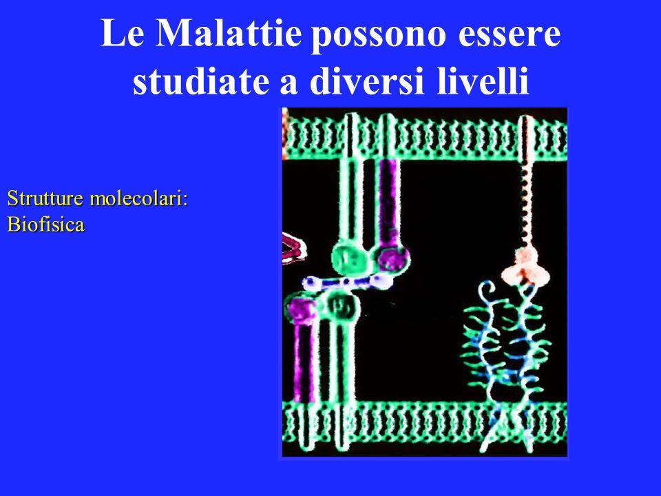 Le Malattie possono essere studiate a diversi livelli Strutture molecolari: Biofisica
