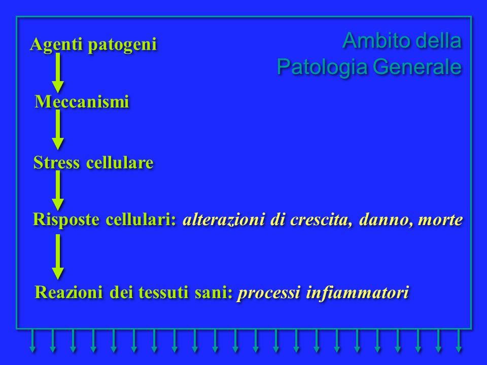 Reazioni dei tessuti sani: processi infiammatori Ambito della Patologia Generale Ambito della Patologia Generale Agenti patogeni Meccanismi Stress cel