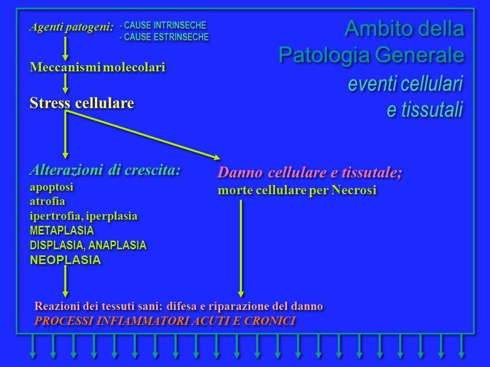 Reazioni dei tessuti sani: difesa e riparazione del danno PROCESSI INFIAMMATORI ACUTI E CRONICI Reazioni dei tessuti sani: difesa e riparazione del da