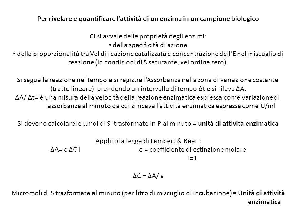 Per rivelare e quantificare lattività di un enzima in un campione biologico Ci si avvale delle proprietà degli enzimi: della specificità di azione del
